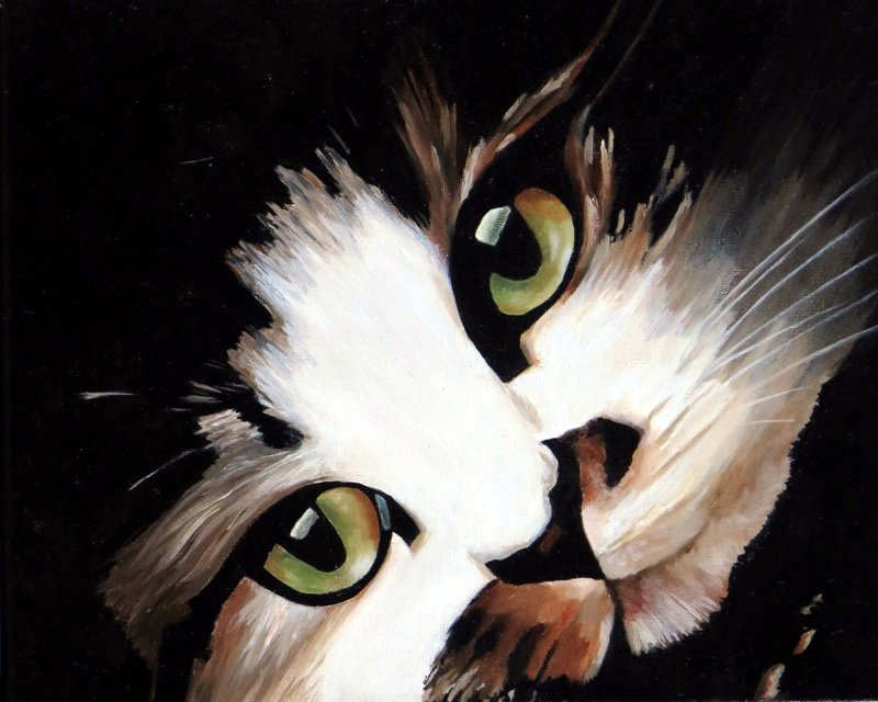 cat, kat, animal lover, muffin, oil painting, olieverf